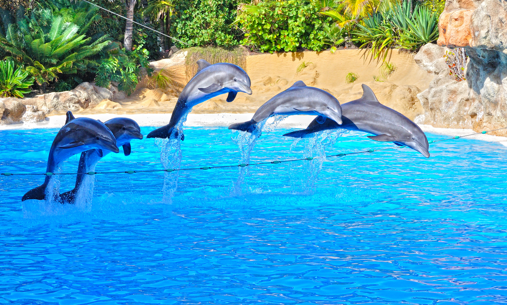 teneryfa-delfiny-atrakcje